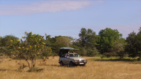 Game Drive Safari in Selous Game Reserve