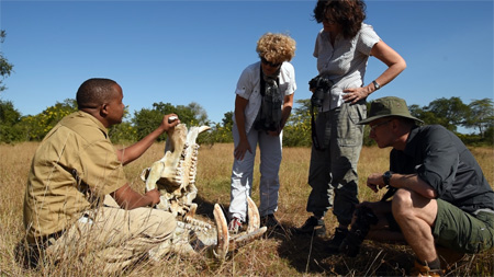 A Hippo Skull found on walking safari