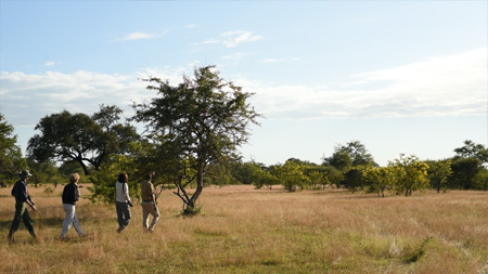 Walking Safari Inside The Selous Game Reserve